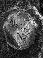 Hands (PaoloMariella) Tags: impronte tronco alberi tree