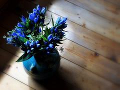 _blue hour (SpitMcGee) Tags: enzian gentian vase sonnenlicht sunlight blau blue stunde hour stillleben stilllife spitmcgee