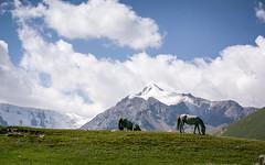 Kyrgysztan-6063 (EbE_inspiration) Tags: kyrgyzstan travel landscape outdoor hill green grass mountain cloud clouds