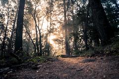The sun peeks through (jonokane) Tags: sonyalpha sunrise warmlight warm a7s karl grapefruit fog karlthefog skyline skylineboulevard 2470gm