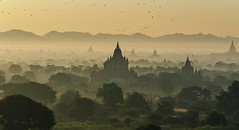 Morgennebel (Martin Hfeli Photography) Tags: nikon d7000 travel reisen asia morning foggy misty mystisch morgendmmerung sunrise sunset sonnenaufgang sun sunlight tempel temples pagodas pagoden pagoda trees birds birma burma myanmar asien reise world beauty beautiful bagan oldbagan old landscape