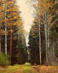 (VeronikaVesna) Tags:           pavlovsk landscape forest garden fall october saintpetersburg trees beauty amazing cool