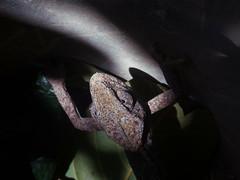 Chameleon (marios_h) Tags: chamaeleochamaeleon chameleon cypruschameleon   cyprus