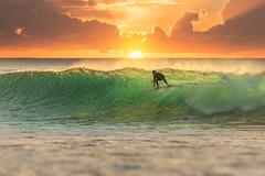 Surfer Surfing at Sunrise (lisame0511) Tags: action athlete barrel beach boards coast exercise extreme fit horizon male man ocean outdoor person ride sea shorebreak sports sun sunrise sunset sunshine surf surfboards surfboard surfer surfing tropical water watersports wave waves unitedkingdomofgreatbritainandnorthernireland