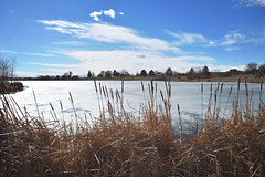 winter is approaching (heartinhawaii) Tags: colorado adamscounty winter park lake reeds cattails frozenlake sky adamscountyregionalpark landscape bluesky winterlandscape coloradolandscape nikond3300
