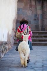 Walking the Lama (Cusco, Peru. Gustavo Thomas  2016) (Gustavo Thomas) Tags: walking lama llama animal people woman traditional peru peruvian gente cusco cuzco southamerica sudamrica colours colores