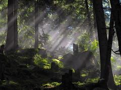 Luci nella foresta (simone.mella) Tags: bagnidimasino foresta nebbia luci