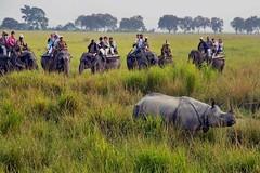 Kanchendzonga National Park (vivaciousanushri) Tags: national kaziranga assam india kanchendzonganationalpark