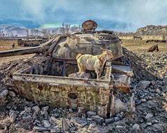 It's Not Too Sharp Waging War (Jomak1) Tags: bamian goat relic jomak1 afghanistan civil war russian tank derelict scapegoat