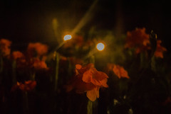 A05_11 (Lauren Tolan) Tags: bokeh light flowers hands repetition