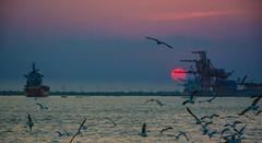 Sunset  in Yangon (free3yourmind) Tags: sunset yangon myanmar burma birds cranes port harbor ships river travel asia