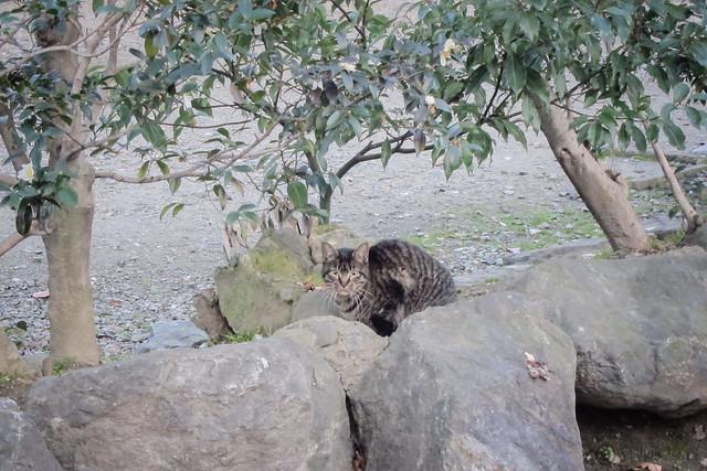 Today's Cat@2013-02-11