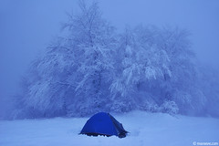 Winter home (.:: Maya ::.) Tags: winter snow tree beauty frozen woods tent bulgaria beech     mayaeye mayakarkalicheva