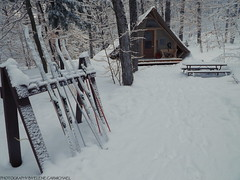 *Camping* (army-brat) Tags: camping winter white snow ski trails tent crosscountry trail gatineaupark crosscountryski wintercamping lacphillipe snowtrails wintercampinggatineaupark