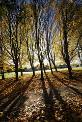 Forfar Loch Country Park, Forfar (VisitScotland) Tags: park autumn trees nature water woodland scotland s