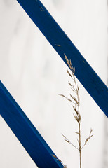 Two Blue Lines (treehuggerdcg) Tags: blue winter snow grass lines nikon d7000 113in2013