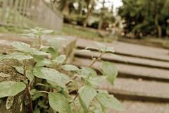 verde al parco (dearinox25) Tags: parco foglie campania 1750 napoli sorrento tamron rugiada canon550d