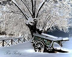 Vecchio carro con neve (Vitafabrizio64) Tags: alberi nikon italia neve carro marche nikond5000