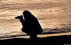 Passion des oiseaux (Diegojack) Tags: eau lumire lac contrejour prverenges