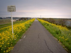 Yellow road by Edo river (Germn Vogel) Tags: road japan asia path horizon chiba suburb bikelane edo kanto outskirts edogawa nagareyama eastasia centralperspective