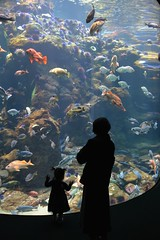 Wonder (clear_eyed_man) Tags: sanfrancisco goldengatepark aquarium academyofscience d5200