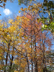 Louisville-Cherokee Park and area (6) (moelynphotos) Tags: autumn trees fall kentucky fallcolors bluesky louisville cherokeepark