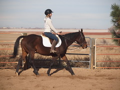 E and Mae, Trot (lostinfog) Tags: colorado mare mae trot e30 2012 201211 riderem