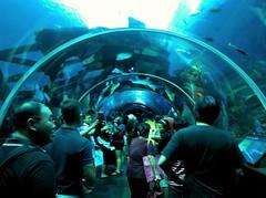 (CX734) Tags: world sea fish coral museum aquarium singapore stingray maritim
