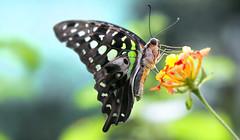 poi si posa sopra un fiore (invitojazz) Tags: flower nature colors butterfly nikon natura fiore colori farfalla d90 invitojazz vitopaladini