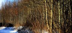 Am Sumpf entlang; Eckernfrde 1 (Chironius) Tags: schnee winter germany deutschland pantano peat swamp bottoms alemania marsh moor bog landschaft marais allemagne eckernfrde germania schleswigholstein sump ogie sumpf pomie niemcy tourbire   turbera pomienie marcageuse szlezwigholsztyn