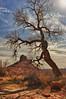 Lone Tree near Moab, Utah (Jeff Clow) Tags: tree western cottonwoodtree moabutah jeffclow professorvalley jeffrclow nikond800 rockyrapids theriverroad dcpt dirtcheapphototour tpslandscape tpsnature