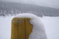 Paletto con parrucca di neve (saneve) Tags: winter snow st neve inverno moritz peculiar engadina particolari particolare
