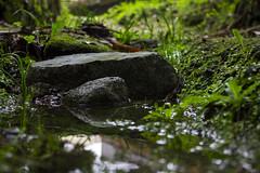 Enchanted Rock (PatrikPinto) Tags: green nature rock enchanted reflexes whater