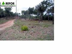 TRABAJOS PREVENCION INCENDIOS SECTOR DE CALDES DE MONTBUI - BARCELONA F5 (JOAQUIN PERALES MARTINEZ - REFOR S.L.) Tags: medioambiente forestales forestal jardineria cortafuegos adif podas ecosistema obraspublicas enagas desbroce tragsa aenor silvicultura maquinariaforestal refor agroforestal vaersa repoblacionforestal trabajosforestales maquinariaagraria construccionesrurales mantenimientoinfraestructuras forestalsl reforsl controlerosion joaquinperalesmartinez regeneracioforestalsl prevencionincendiosadif prevencionincendiosforestales prevencionincendiosferrocarril limpiezavegetacion jardineriaimagenes controldelavegetacion prevencionincendiosforestalesadif prevencionincendiosimagenes estabilizaciondetaludes construcciongaseoducto restauracionmedioambiental tractordeorugas desbrozadorademartillos desbrocemecanizado astilladoraforestal tractorforestal maquinariajardineria trabajostragsa regeneracionforestal prevencionincendiosforestaleslineaaltatensin podasredelectrica cortafuegosredelectrica prevencionincendiosredelectrica trabajossilvicolas prevencionincendiosforestalesredelectrica po