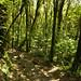 Bosque nuboso de Santa Elena (2)