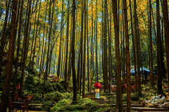 山行 (zhongjianren76) Tags: mountain tree photoshop woods pentax outing k5 fa31mm