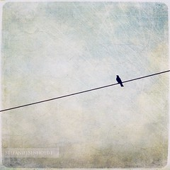 free as a bird ({Miss Honey}) Tags: bird silhouette square thankyou textures blackbird lesbrumes ellenvd lenabemanna