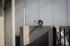Today's Cat@2013-04-15 (masatsu) Tags: cat canon catspotting thebiggestgroupwithonlycats powershots95