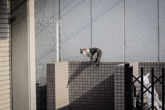 Today's Cat@2013-04-15