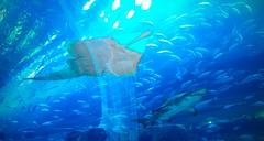 IMG_0919 (shirokami85) Tags: white black animals penguins dubai sony sharks fishes burj rx100 khaleefa