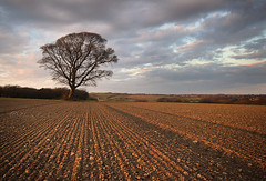 Lead in lines....... (Chrisconphoto) Tags: tree field goldenhour crank furrows merseyside ploughed sidelight goodlight billinge leadinlines