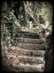 Steps (SeritaDTurner) Tags: stairs steps arkansas pathway eurekasprings gardenpath eurekaspringsarkansas