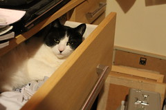 Tinker in the draw (andrewcrowther) Tags: cat draw tinker