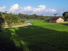 Villager's House by the Paddy Field (hastuwi) Tags: jawatengah indonesia idn magelang sawah