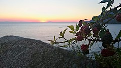 Sweet Sunset  (andrealamalfa) Tags: calabria italia italy joppolo mare sea torre tower sunset tramonto more berry stromboli isoleeolie isole eolie islands rosso red orange arancione fumo smoke estate summer 2016 agosto august sony xperiaz3 xperia z3 sole sun natura nature frutta fruit