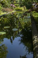 Lily Pond (hippyczich) Tags: lilypond terranostra botanicalgardens furnas saomiguel azores reflection