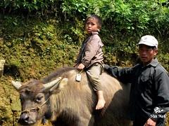 Buffalo Boy by Stan Mark (Stan Mark) Tags: boy buffalo buffaloboy stanmark vietnam vietnameseboy  sapa banphovillage