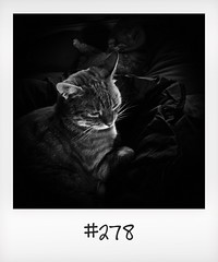 """#DailyPolaroid of 2-7-16 #278 • <a style=""""font-size:0.8em;"""" href=""""http://www.flickr.com/photos/47939785@N05/28735687190/"""" target=""""_blank"""">View on Flickr</a>"""