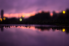 (cara zimmerman) Tags: indianapolis puddle reflection highlandpark sunset purple sky pink bokeh