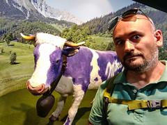 nou koe (zement) Tags: bludenz vorarlberg austria